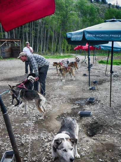 CC Sled Dogs HDR Deep 1