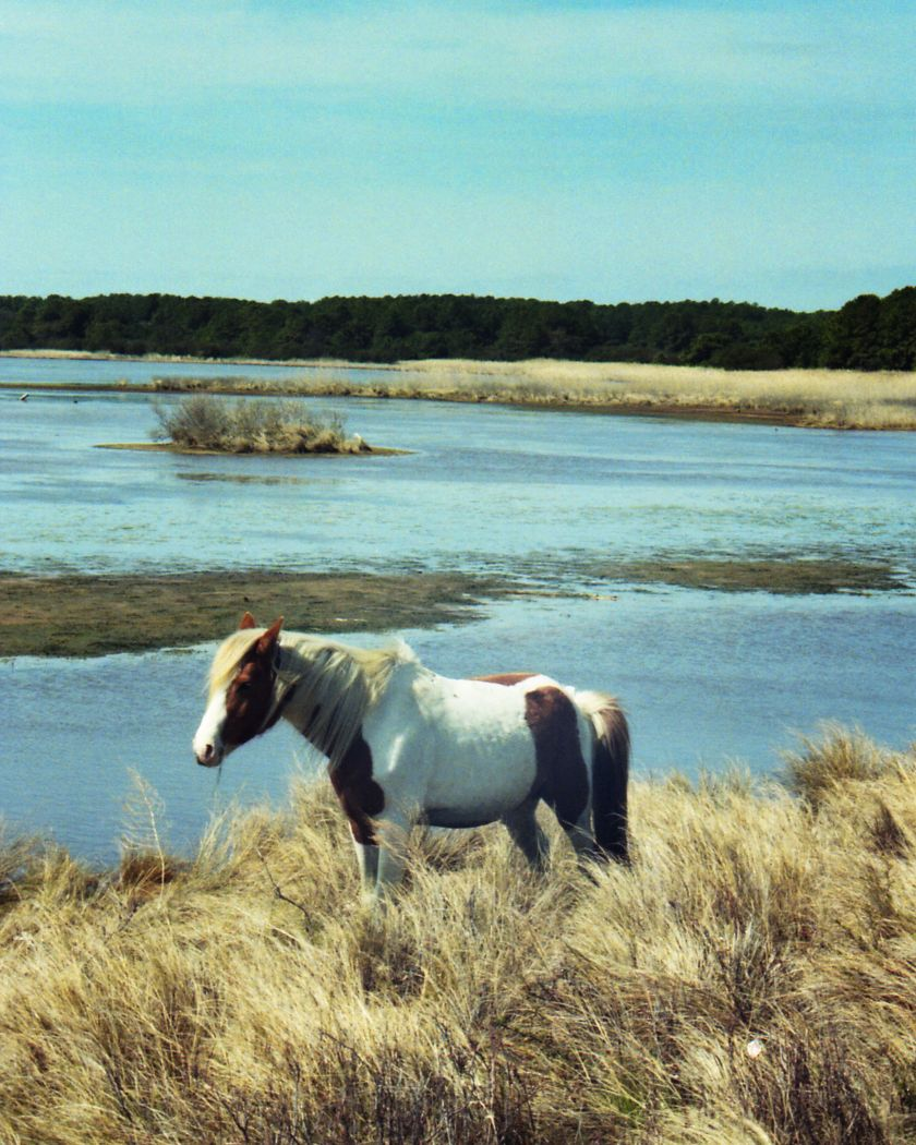 Chincateague Stallion Color Efx Graduated Ektachrome 64p foliage