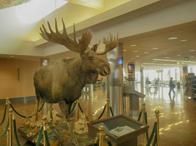 Airport Moose HDR Default