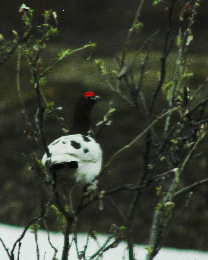 Ptarmigan Color Efx Fuji Velvia 100 Foliage
