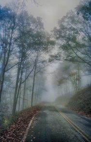 Foggy Road